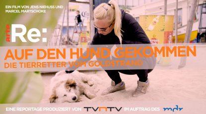 header_TITEL Straßenhunde_Homepage